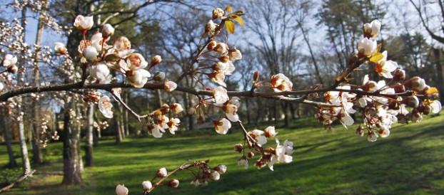 Danas je Dan planete Zemlje- 22. april
